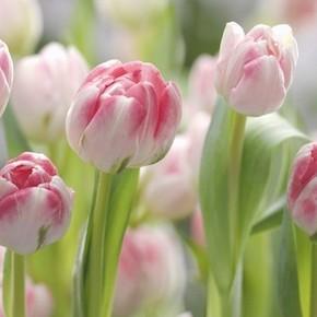 Праздник весны, любви и надежды на счастье!