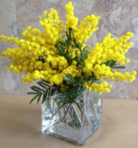 Мимоза - традиционный подарок на 8 марта
